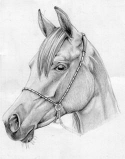 Arabian profile