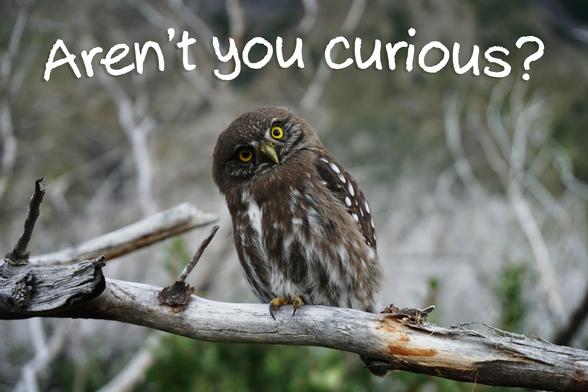 Aren't you curious?