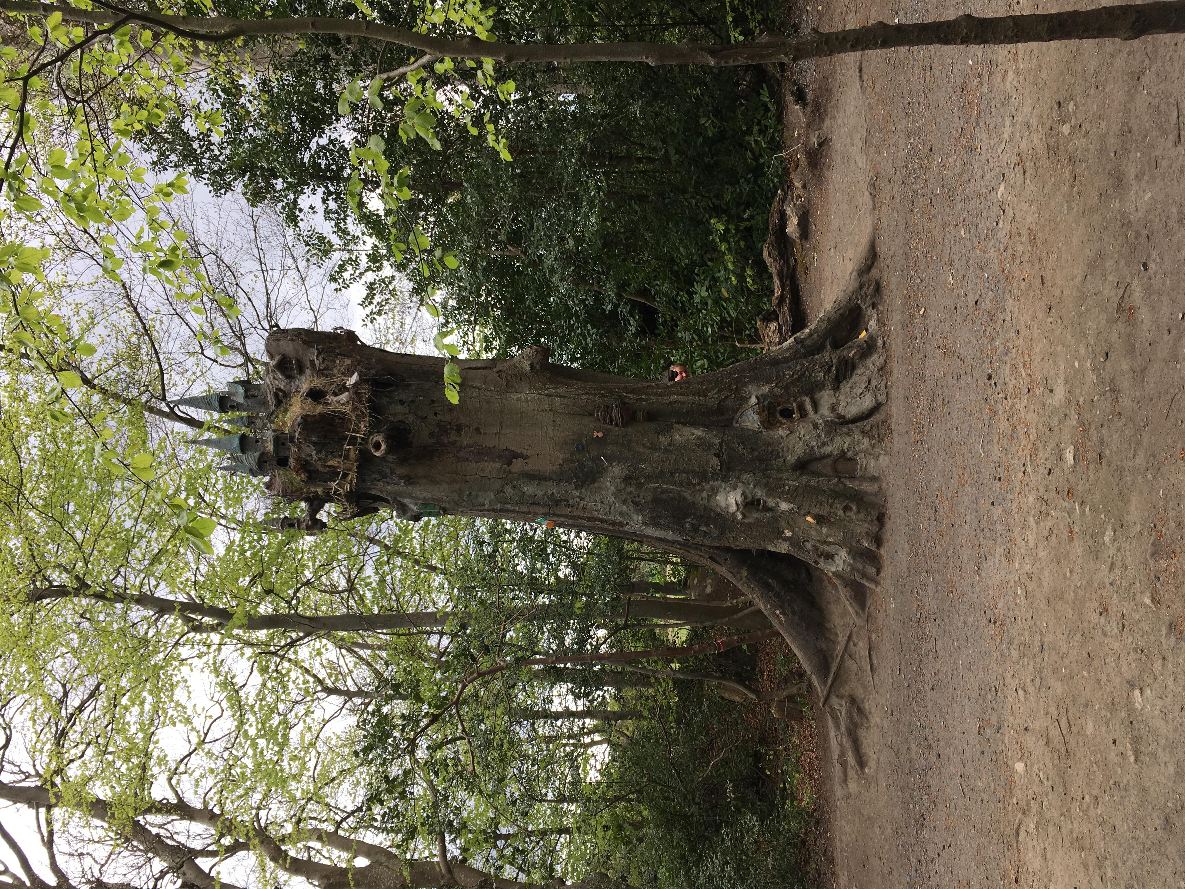 The Fairy Tree, Marley Park, Dublin