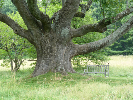 Beo & Be: Tree of the Week: Ash