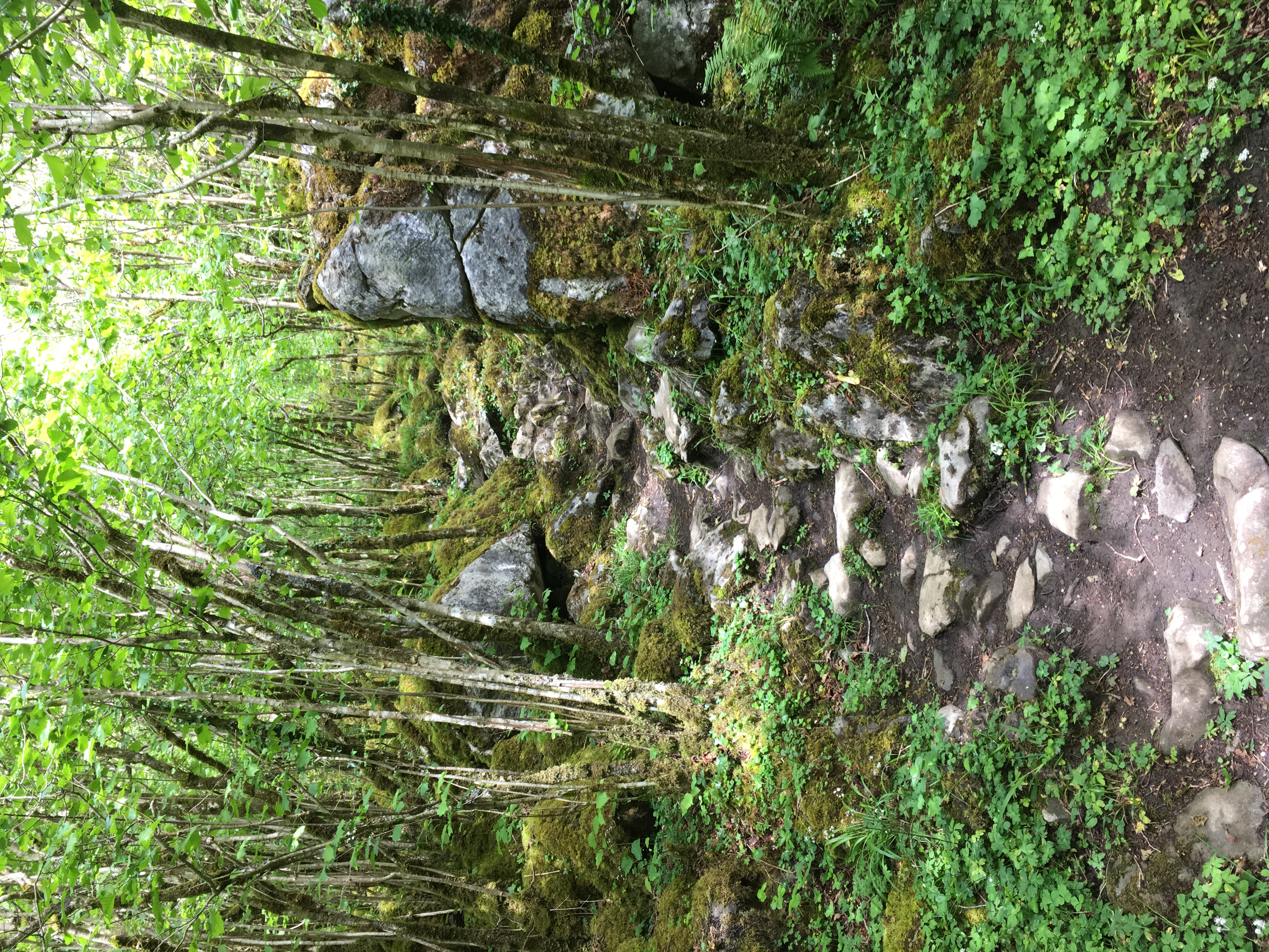 Burren Pathway