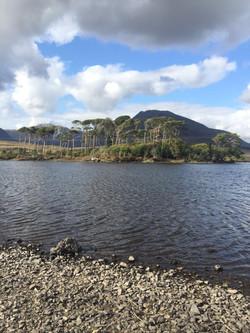 Pine Island, Derryclare, Connemara