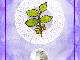Tree of the Week : Elm