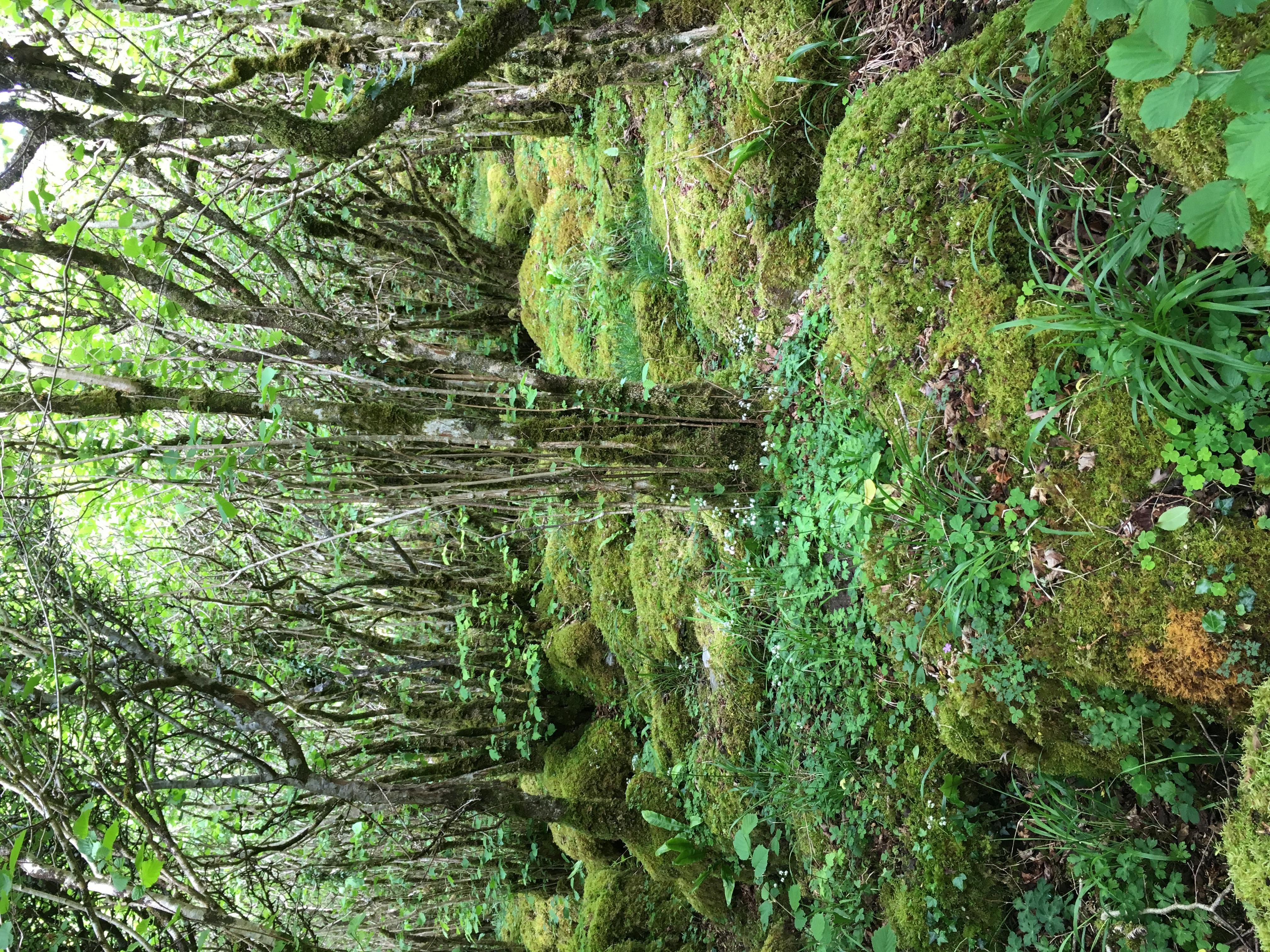 Burren Woods