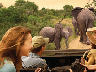 Adventures By Disney Spotlight: South Africa