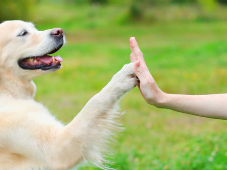 Your dog could help you live longer