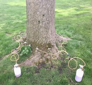 Tree I.V. System