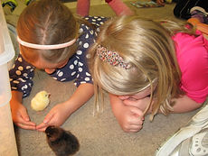 Grace Neighborhood Nursery School girls play with baby chicks.
