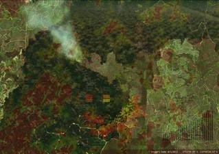 scene of the crime - palm oil indonesia 2