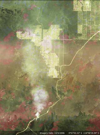 scene of the crime - palm oil indonesia 1