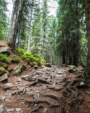 woods-pathway-forest-trail-2210x1473.jpg