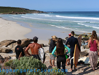 Great White Shark Clears Water At Redgate Beach