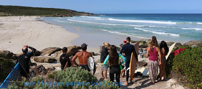 shark sighted redgate beach