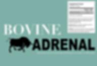 Bovine adrenal.png