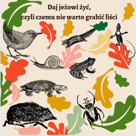 Daj jeżowi żyć, czyli czemu nie warto grabić liści
