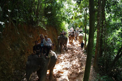 о.Пхукет. Прогулка на слонах.JPG