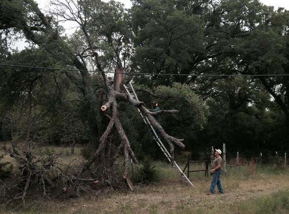 2014-04-26 RRR Tree Trimming.JPG