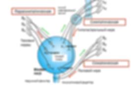 рецепторы мочевого пузыря нейрогенный мочевой пузырь
