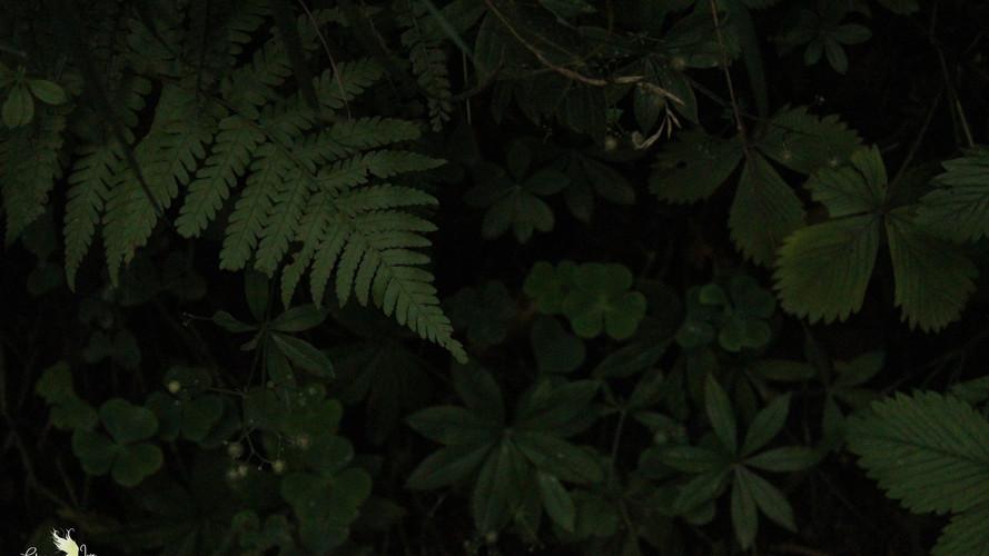 magischer Waldboden II