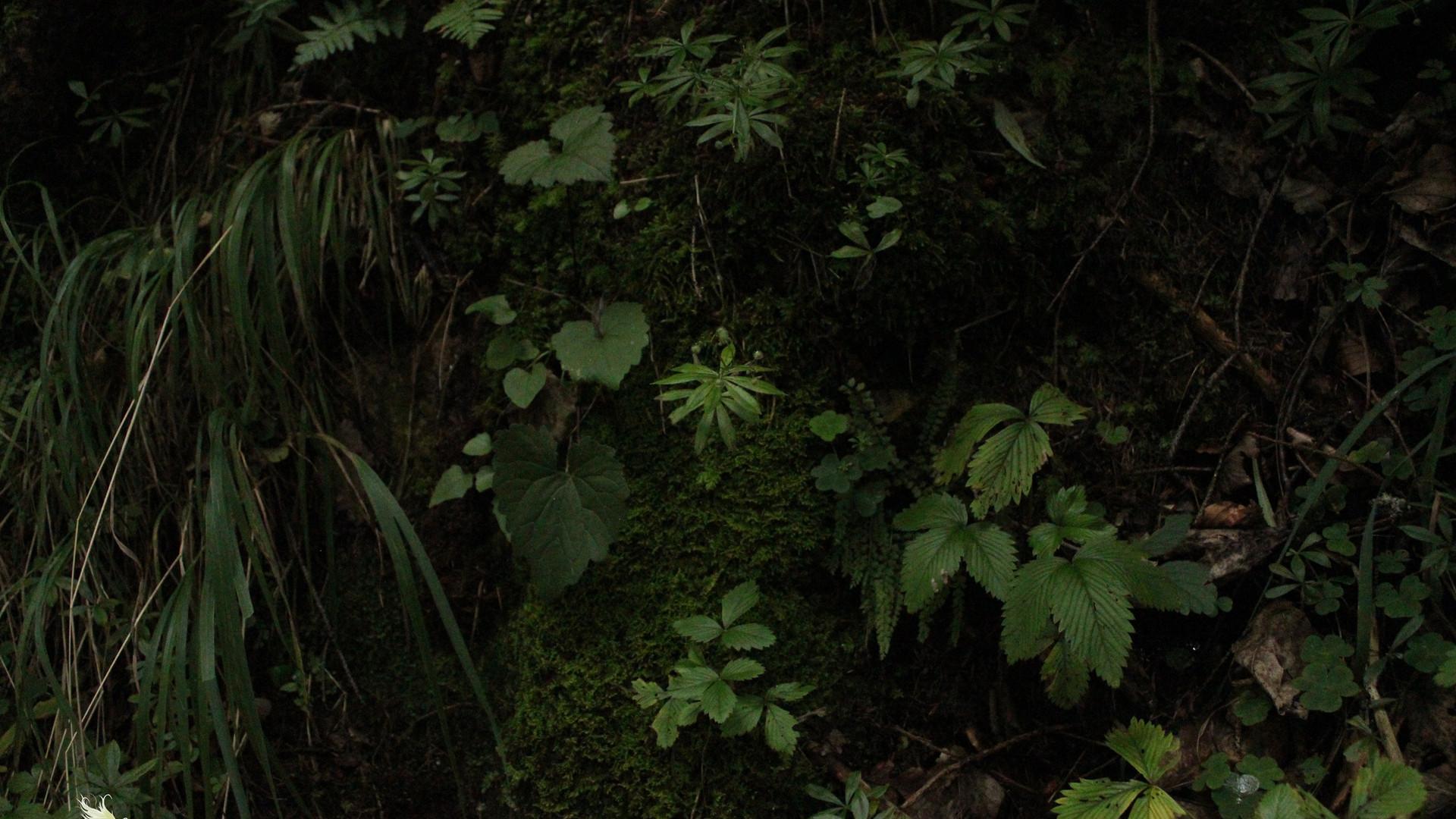 magischer Waldboden I