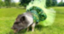 Pig in marijuana tutu