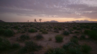 bushes_and_sand_in_landscape_at_sunset_b
