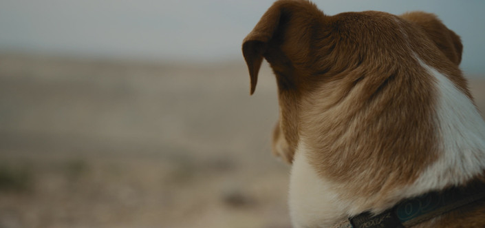 dog_looks_around_in_desert_by_Ami_Bornst