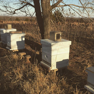 Our bees are ready for warmer weather.jp