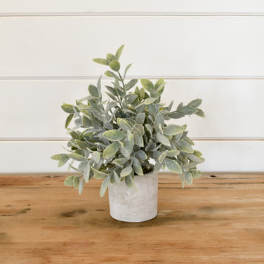 potted plant  4. ea  qty. 3