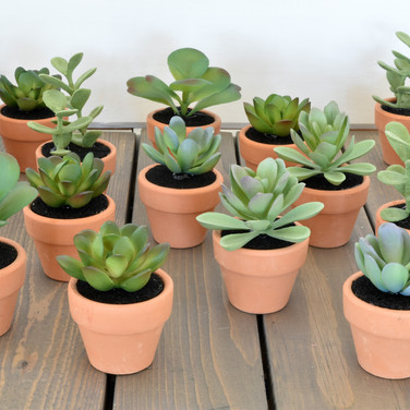 mini potted succulents  1. ea  qty. 24