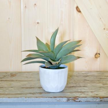 plant in concrete pot  15.   qty. 3