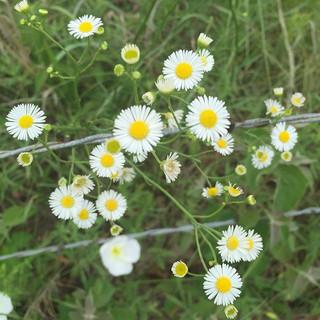 #grassrootsfarm #wildflowers #garden #fa