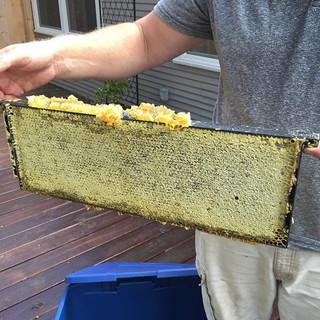 Harvesting honey today! Yum!! #grassroot