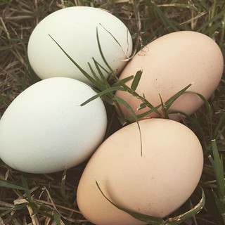 Pretty eggs. We are a little overwhelmed