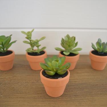 mini succulents in clay pots  1.  qty. 10