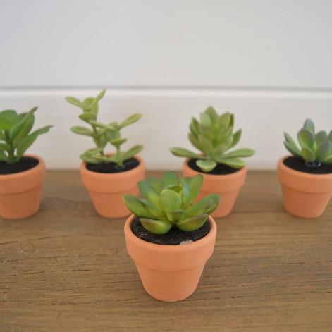 mini succulent pots  1. ea  qty. 24