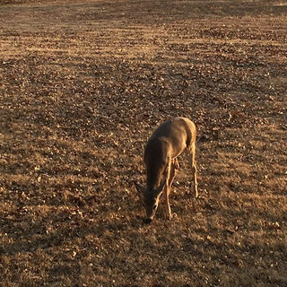 Such a pretty little deer right in our b