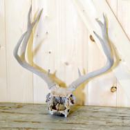 deer antlers  12.  qty. 1