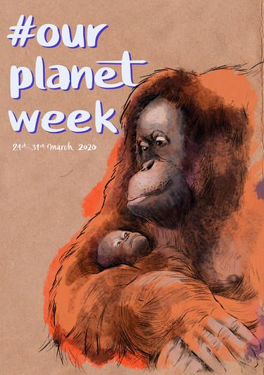 OPW_Orangutan.jpg
