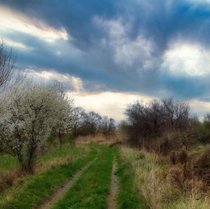 Chemin de printemps