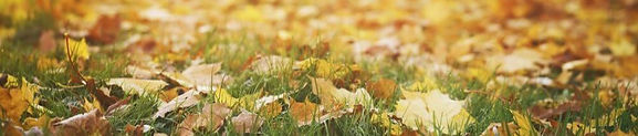 Fall-Leaves-on-Grass-e1477676394578_edit