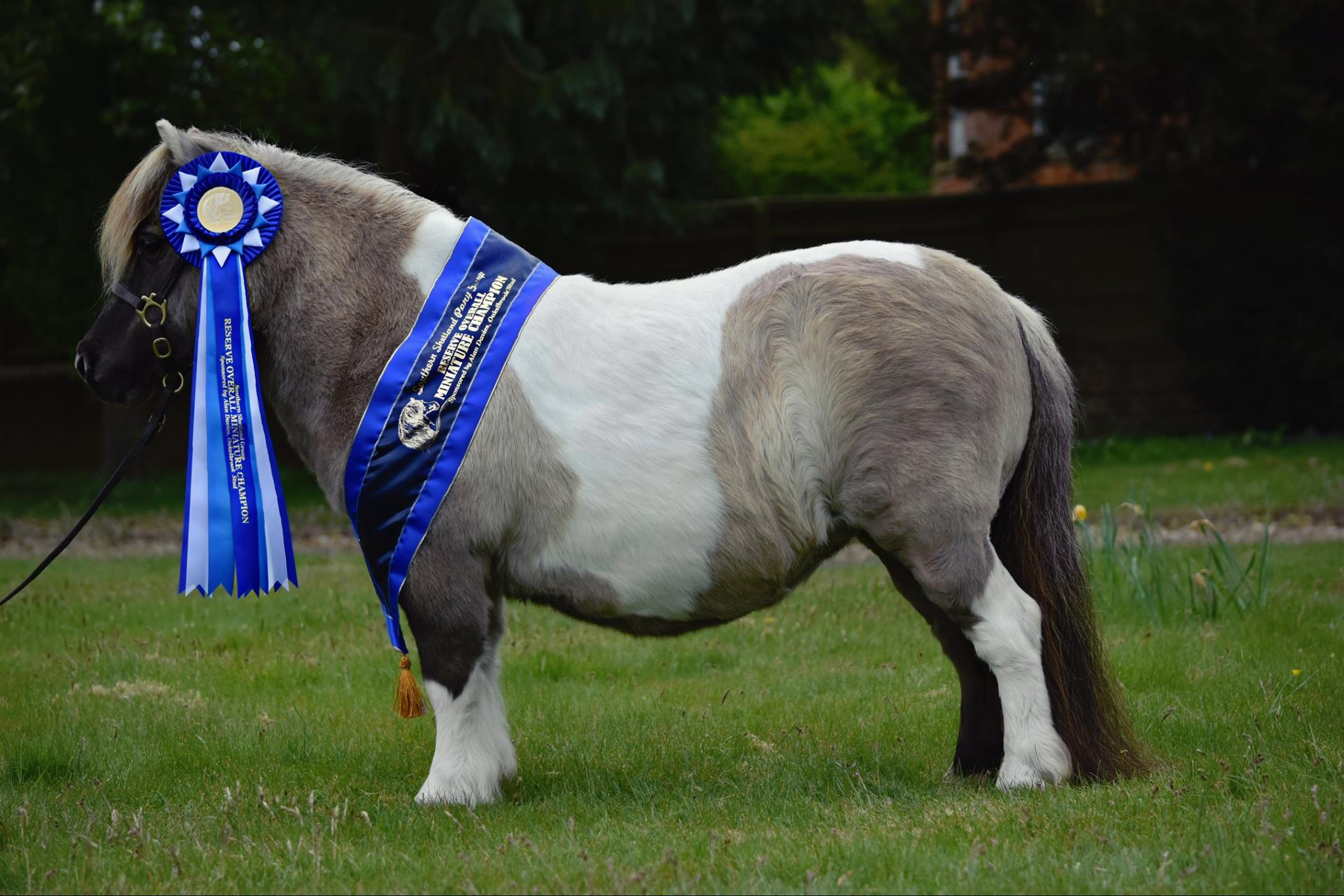 Reserve Miniature Ring Champion