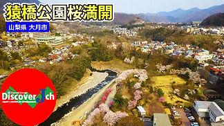 猿橋公園 桜 入り口.jpg