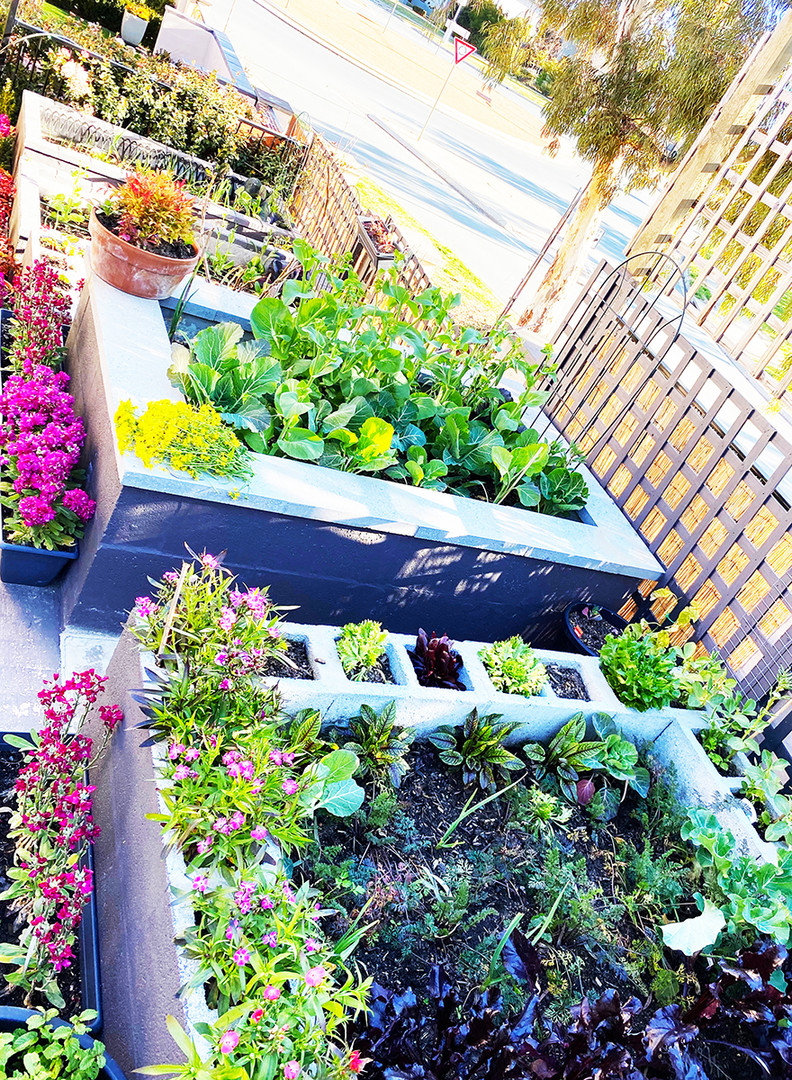 Planter Boxes with plants