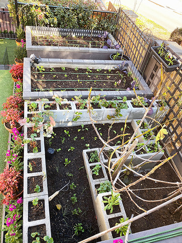 TopViewPlanterBoxes with new seedlings