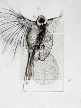 Cervelle d'oiseau