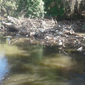 Hennops River Restoration and Clean Up Campaign - Day 9