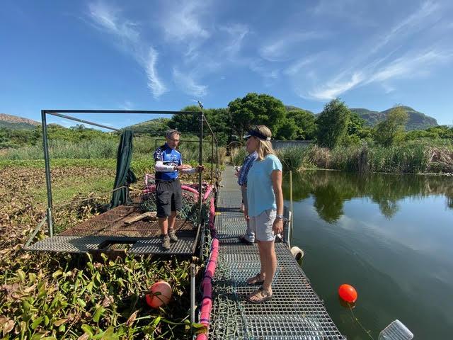The Hartebeesport Dam is cleared of invasive hyacinth