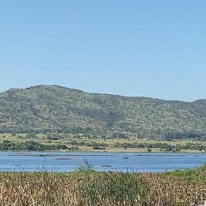 The Hartebeespoort Dam is cleared of invasive hyacinth