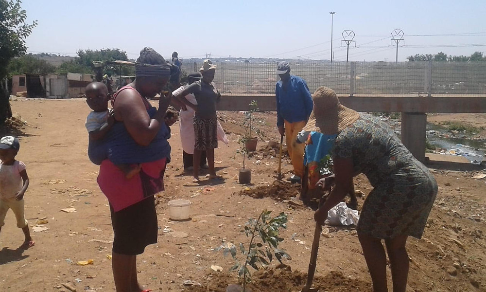 Trees planted on the banks of the Duduza